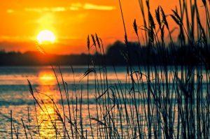 lake, reeds, sunset